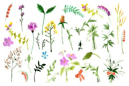 Illustration pour Wild flowers collection. Watercolor illustrations - image libre de droit