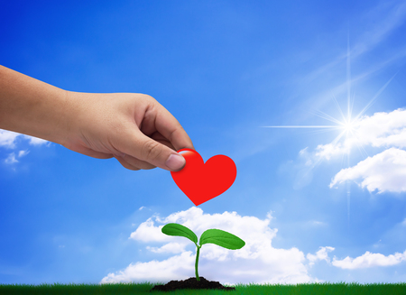 Photo pour Donation concept, hand holding red heart on blue sky background, growing young plant - image libre de droit