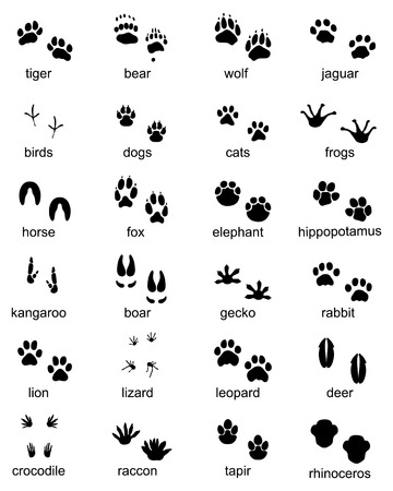 Ilustración de Set of footprints of wild animals, illustration of black silhouette - Imagen libre de derechos