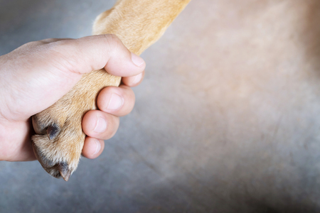 owner petting his dog, Hands holding paws dog are taking shake hand greet together. empty space for text.