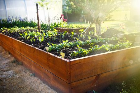 Photo pour Spring green garden in a wooden box - image libre de droit