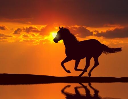 Foto de Horse running during sunset with water reflection - Imagen libre de derechos