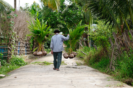 Foto de Farmer carrying palms prepared for planting on field - Imagen libre de derechos