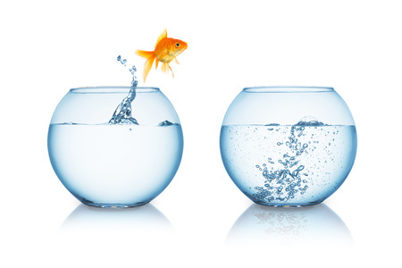 gold fish jumps in to a fishbowl with hot water isolated on white