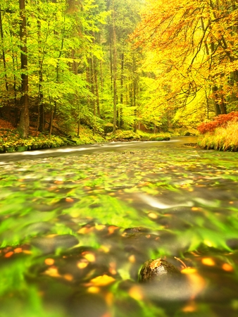 Photo for Wonderful autumn nature. Colorful leaves glowing in evening sunlight above  the mountain river. At sunny day in the forest - Royalty Free Image