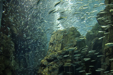 amazing fishes swimming in Japanese ocean park