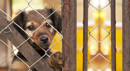 Photo for Dog rescue concept - website banner of a puppy behind a fence - Royalty Free Image