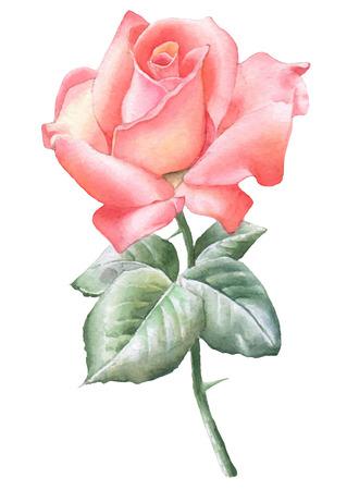 Illustration pour Illustration with red rose. Vector. Watercolor. Hand drawn. - image libre de droit