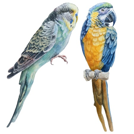 Illustration pour Watercolor birds.  Blue budgerigar and blue parrot macaw. Vector. Hand drawn. - image libre de droit