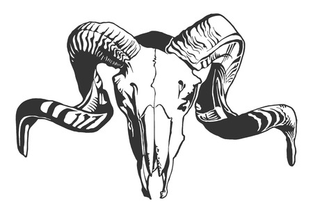 Photo for Illustration with goat skull.  Hand drawn.  Vector. - Royalty Free Image