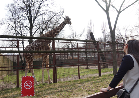 Foto de The girl is looking at the giraffe at the zoo. Spring day - Imagen libre de derechos