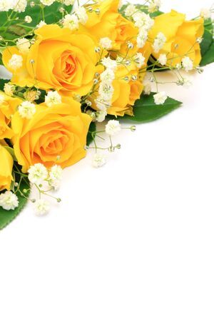Photo for yellow rose  - Royalty Free Image