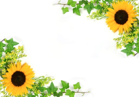 Photo for I attached ivy to a sunflower and took it in a white background. - Royalty Free Image