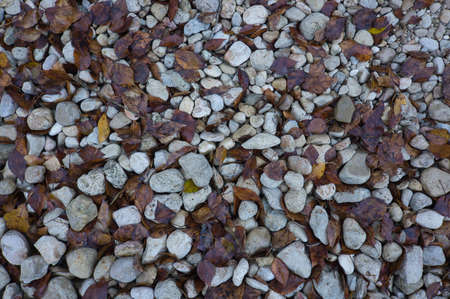 A path of large stones with fallen autumn leaves. Natural background for inserting text in spain
