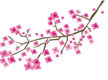 vector plum blossom branch