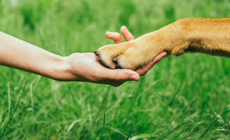 Photo for Dog paw and human hand are doing handshake on nature, friendship - Royalty Free Image