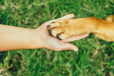 Photo pour Dog paw and human hand are doing handshake on nature - image libre de droit