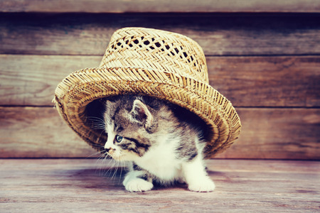 Foto de Little kitten under the hat on wooden background. Image with retro vintage instagram filter - Imagen libre de derechos