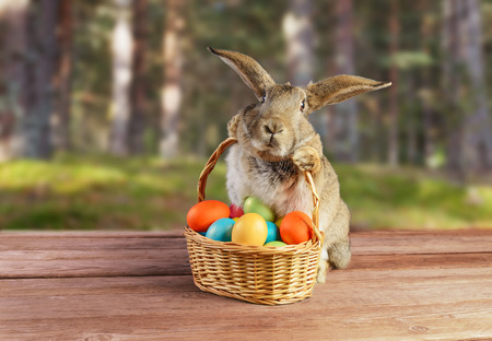 Photo for Easter rabbit sits with basket of colored eggs on spring nature - Royalty Free Image