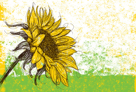 Illustration pour Sunflower - image libre de droit