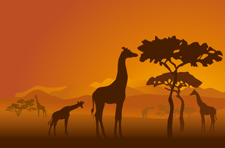 Illustration pour Silhouettes of giraffes in national park of Kenya - image libre de droit