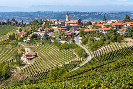 Vineyards on the hills and small town of Treiso on background in Piedmont, Northern Italy
