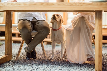 Photo pour Hungry dog waiting for food under the table outdoors - image libre de droit