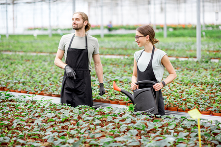 Photo pour Couple of workers of plant production watering and supervising the growing process in the greenhouse - image libre de droit