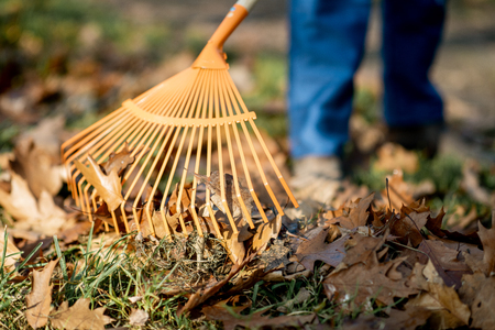 Foto de Man sweeping leaves with orange rake on the lawn, close-up view with no face - Imagen libre de derechos