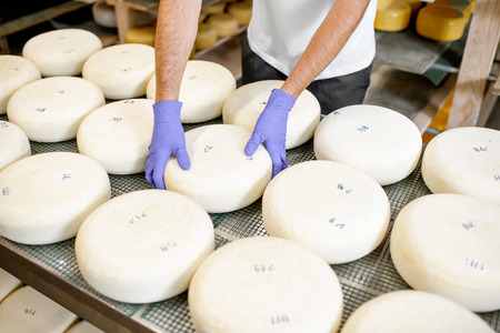 Photo for Worker in protective gloves taking fresh salted cheese wheel ready for aging process at the manufacturing. Close-up view - Royalty Free Image