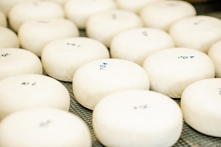 Photo for Fresh cheese wheels after the salting process on the table ready for aging - Royalty Free Image