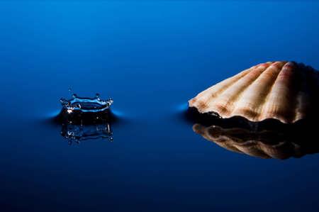 Splash with Shell