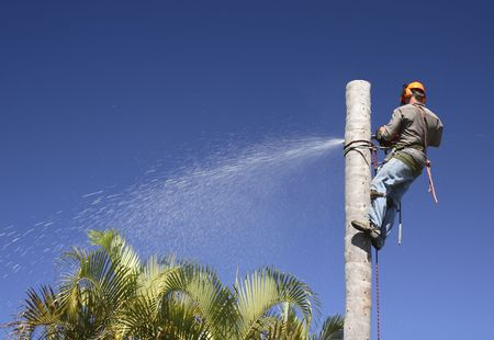 Man cutting down the palm tree trunk in sections