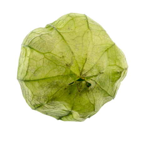 The Tomatillo or Mexican Husk Tomato, Physalis philadelphica, wrapped in their paper-like husk.