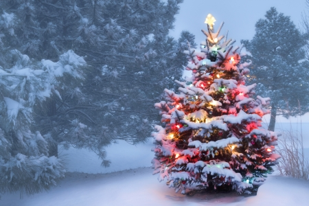 Photo for This decorated outdoor snow covered Christmas Tree glows brightly on this foggy Christmas morning   - Royalty Free Image