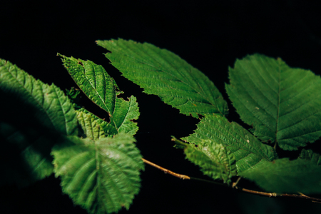 Photo for Green leaves on a dark background in the forest - Royalty Free Image