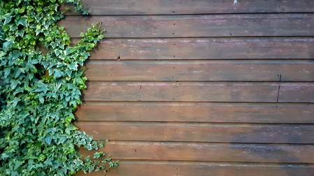 Photo pour Side of a dark wooden shed with ivy growing up the side - image libre de droit