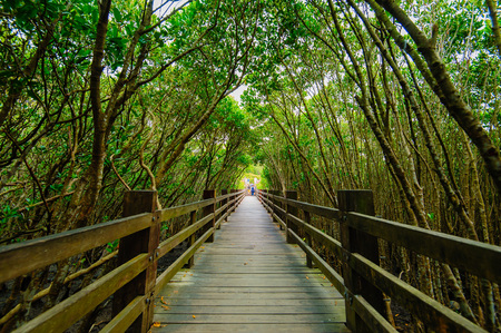 Photo for Mangrove forest with wood Walk way - Royalty Free Image