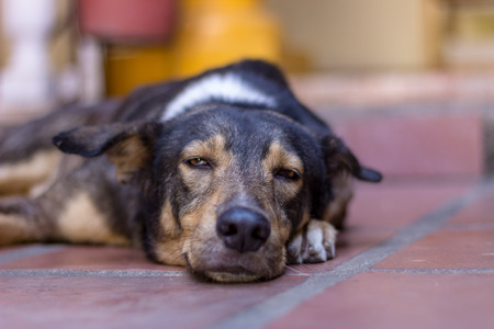 Photo pour beautiful dog sleeping on the floor - image libre de droit