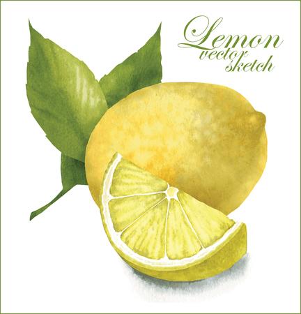 Ilustración de Hand made vector sketch of lemon with leaves. - Imagen libre de derechos