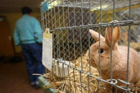 Foto de Rabbit in a cage at a exhibition - Imagen libre de derechos