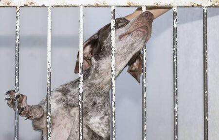 Foto de A dog alone, sad and abandoned behind the fence in a shelter. - Imagen libre de derechos