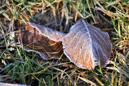 Photo for First Hoarfrost on the Beech Leaf in the Forest - Royalty Free Image