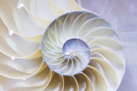 Photo pour the nautilus shell section - image libre de droit