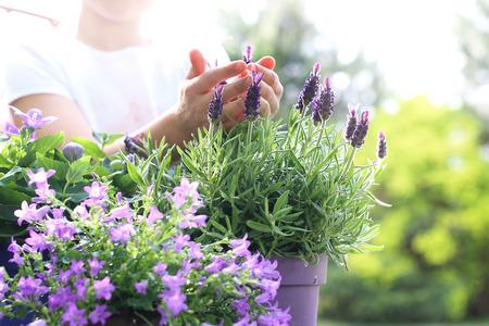 Photo pour My beautiful garden Lavender flower arrangement - image libre de droit