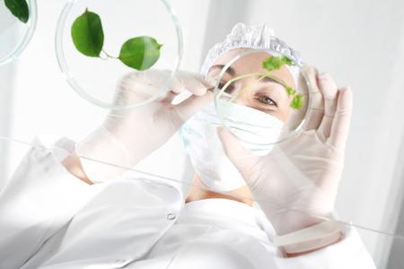 Foto de In vitro plants. Biotechnologist examine the plant samples in the laboratory - Imagen libre de derechos