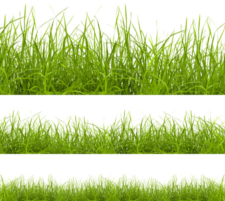 Photo pour green grass isolated on white background - image libre de droit