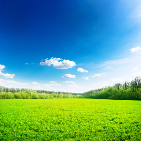 Foto de Green field under blue sky. Beauty nature background - Imagen libre de derechos