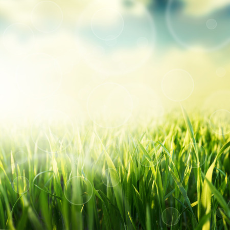 Photo pour Green grass natural background with selective focus - image libre de droit
