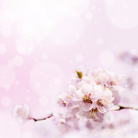 Photo for Spring white blossom against soft pink background - Royalty Free Image